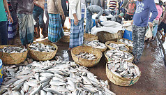 Off-season Ilish floods Barisal market, sells cheap