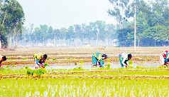 Bogra farmers begin Boro cultivation...