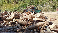 Trees being cut down in Bandarban, hills...