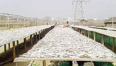 After lockdown lull, dried fish industry...