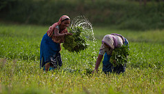 Women twice as active as men in farm...