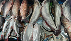Fish Festival held in Moulvibazar