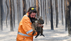 Australia wildfires: The Irwin family...