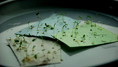 Start-up develops plantable seed paper...