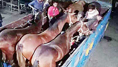 6 trained horses imported from India for Bangladesh Police