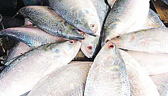 Ilish at affordable prices across Bhola