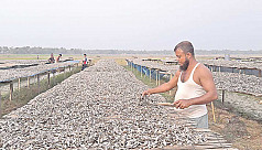 Dry fish brings smiles for Narail fishermen, traders