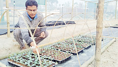 Naogaon farmer grows vegetable plants using coco-dust method