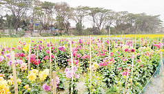 Flower kingdom in Shabdi, a potential source of foreign currency