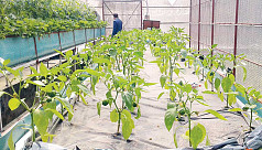 BARI sees success in hydroponic farming...