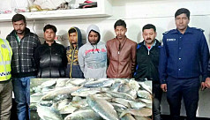 6 Indians arrested with ilish in Benapole