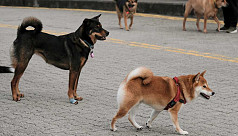 China's Shenzhen bans the eating of cats, dogs after coronavirus