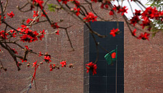 In pictures: Spring blossoms in urban...