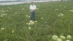 Watermelon growers on the verge of bankruptcy...