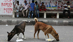 DNCC to sterilize stray dogs unlike DSCC