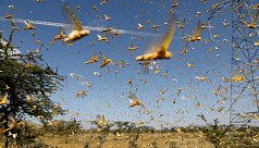 New, larger wave of locusts threatens millions in Africa