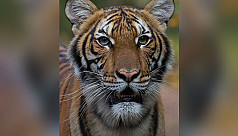 New York zoo tiger tests positive for...