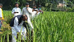 Video of MP harvesting immature paddy...