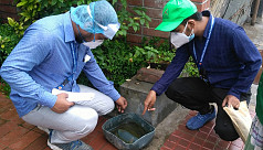 DGHS finds Aedes larvae in 25% of Dhaka...