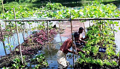 Vegetable farming on floating beds gains...
