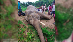 Elephant dies from electrocution in...