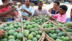 Mangoes worth Tk500cr sold off in...