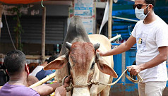 Supply shortage pushes up cattle prices...