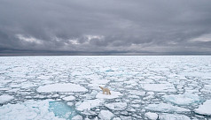 Study: Arctic could be free of sea ice...