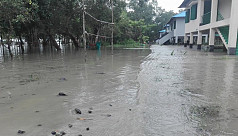 Karamjal Wildlife Breeding Centre inundated by tidal surge