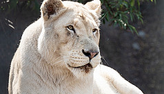 S African ranger mauled to death by...