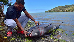 Thousands protest in Mauritius over dead dolphins, demand resignations