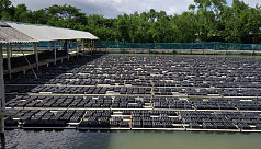 Shrimp farming and environmental degradation:...