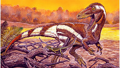 New dinosaur cousin of T-rex discovered...