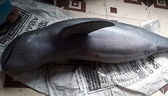 Dead dolphin discovered along Kholpetua...