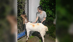 Mim trolled for buying sacrificial animal for staff