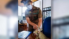 Detained 'drug smuggler' cat escapes Sri Lanka prison