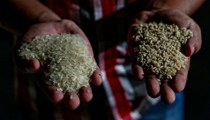 Bangladesh introduces micronutrient-enriched...