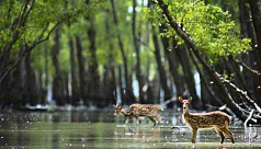 Covid-19: Sundarbans tourism businesses hope for reopening
