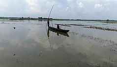 Canal encroachment: Thousands of acres of croplands under water in Meherpur
