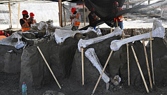 Mammoth graveyard unearthed at Mexico's new airport