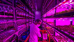 Pandemic forces pink farm to get creative in Brazil