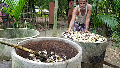 Vermiculture gains popularity in Sylhet