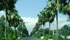 A feast for the eyes: Palm trees in...