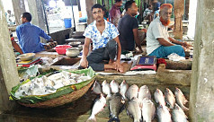 Jessore fish farmers demand ban on fish import from India