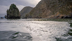 Scientists detect mass death of sea...