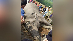 Electrocuted, bullet-ridden Asian elephant dies in Chittagong