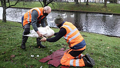 Norway to ban outdoor poultry after...