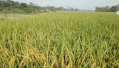 Farmers worry about market price despite...
