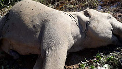 Habitat destruction: 13 Asian elephants...