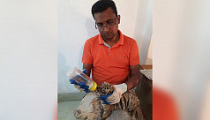 2 newborn Bengal tiger cubs die at Chittagong...